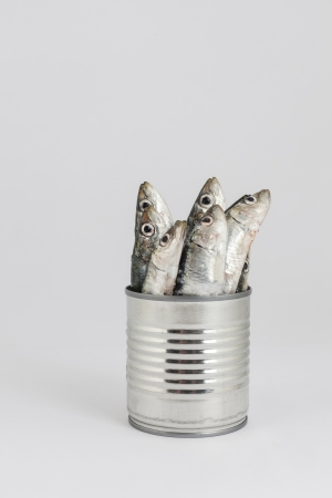fresh fishes, sardine, in tin can as a preserved food Stock Photo