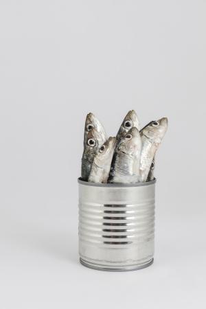 verse vissen, sardine, in blikje als conserven Stockfoto
