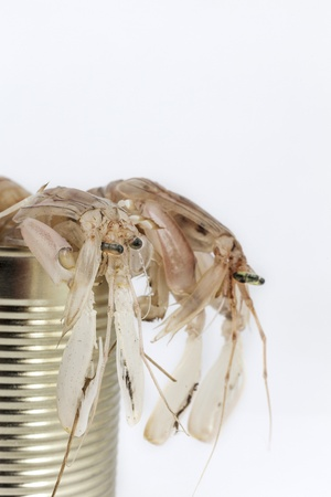 crustaceans: fresh fishes, crustaceans, in tin can as a preserved food Stock Photo