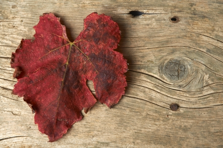 Autumn red grape leaves over wooden background.
