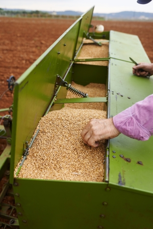 seed drill: loading seeding machine with wheat seeds and fertilizer to cultivating fields