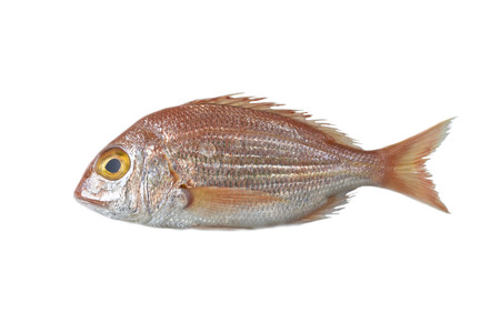 Verse vis, red snapper geïsoleerd op een witte achtergrond Stockfoto