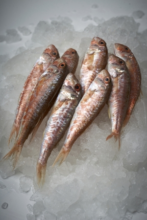 mullet: Fresh fish mullet on ice