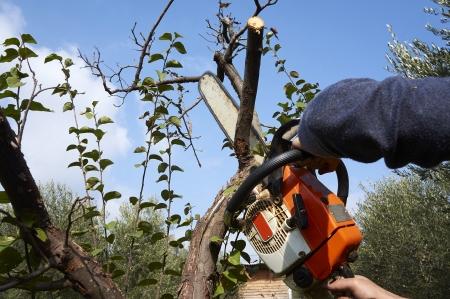 必要な保護のない男チェーンソーで木を切る