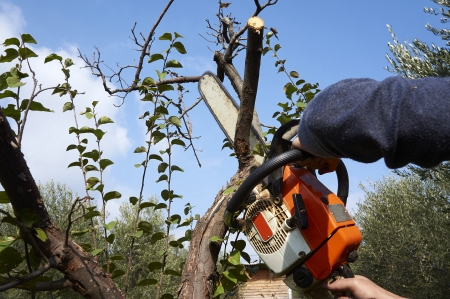 man without the necessary protection cuts tree with chainsaw