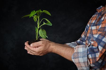 Man handen die een plant. ecologisch concept