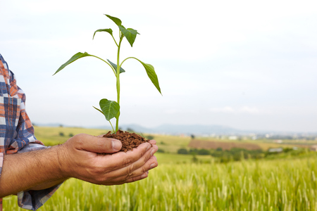 earth handful: Man hands holding a plant. ecology concept Stock Photo