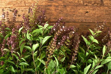 kitchen bench: fresh basil on a wooden kitchen bench Stock Photo