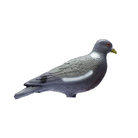 decoy: Plastic pigeon decoy isolate on a white background Stock Photo