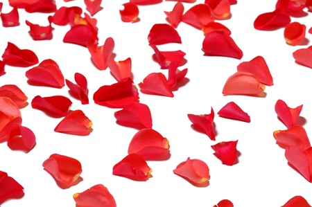 Few red rose petals on white background Stock Photo