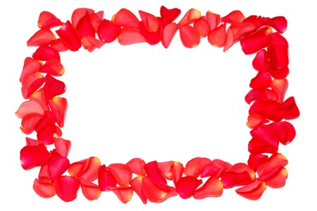 Frame from rose petals on white background photo