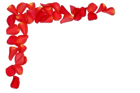 Frame from rose petals on white background