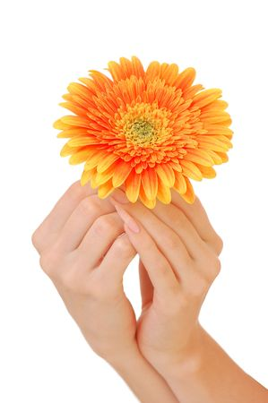 Woman hand with beautiful flower isolated on white background Stock Photo