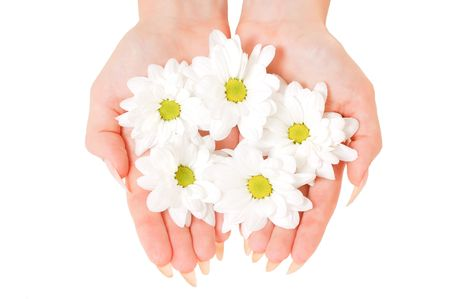 Beautiful cupped hands with white flowers isolated on white background