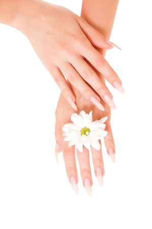 Woman hands with flower isolated on white background