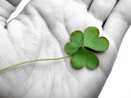 lucky clover: clover in the hand , can be used as concept for luck related themes, selective desaturation Stock Photo
