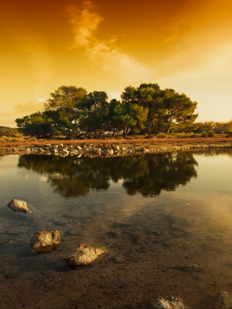 trees with reflection on the water under the golden sunset light, Adriatic coast,Croatia