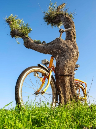 Old bike chained to the tree, for security, ecology, nature themes