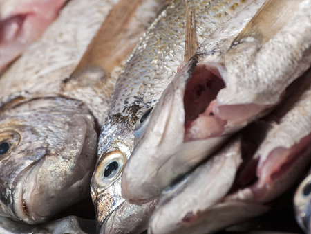 fresh and cleaned sea  fishes,closeup,for seafood,fishing or  healthy eating themes 版權商用圖片 - 26084053