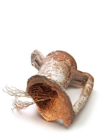 greek pot: antiche anfore rotte con corallo dentro su sfondo bianco