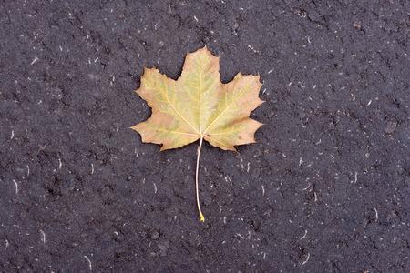 singularity: Single maple leaf on textured asfalt