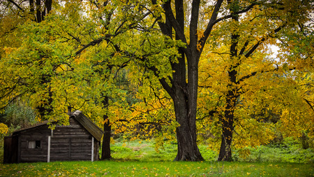 Autumn trees and a woodshed in russian village. Stock Photo