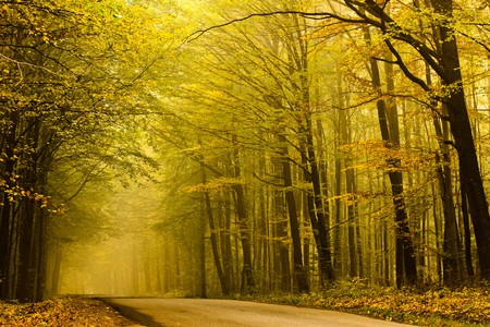 Road disappearing to the left in the fog in autumn forest. photo