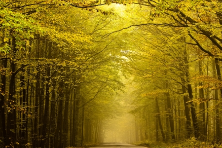 Road disappearing in the fog in autumn forest.