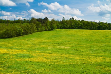 Green spring meadow with trees behind and sky above. Stock Photo