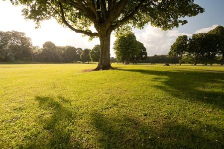 Foto parco soleggiato nel parco di Bute in Cardiff, UK.
