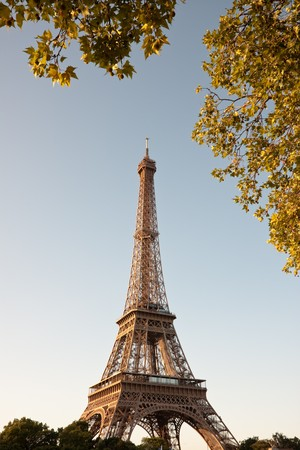 Eiffel tower in the early morning with golden branches of nearby tree. Stock Photo - 7799521