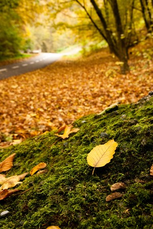 Autumn scenery, leaf on the moss is in focus, the road behind is blurred. photo
