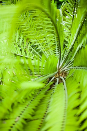 Green palm leaves from top, shallow focus photo