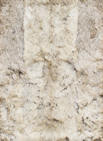 White leathers of rabbits, four pieces together Stock Photo - 13713977