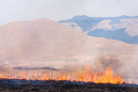 burnt wood: Controlled grass burning near Mount Aso, Japan Stock Photo