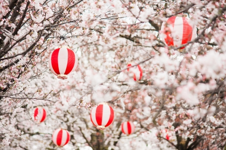 Cherry blossoms with Chinese lanterns in the trees photo