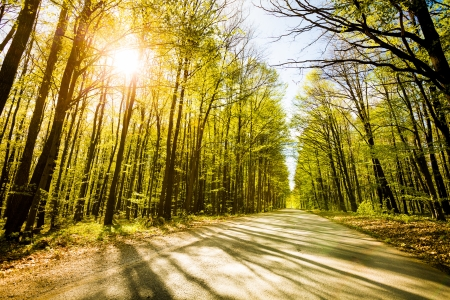 Road in beautiful forest with sun shining through