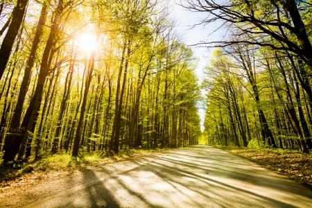 Strada in bella foresta con il sole che splende attraverso