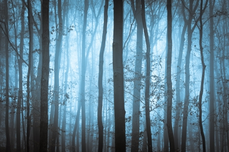 Dark blue spooky forrest with trees in fog photo