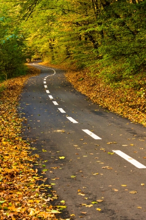Newly built road in colorful autumn forest  photo