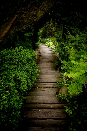 A mysterious path through the bush in to the light. Stock Photo