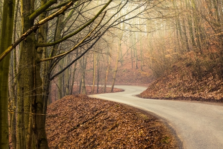 Empty road in forest during autumn with bright light shining through