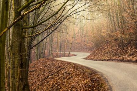 Strada vuota nella foresta durante l'autunno con la luce splende attraverso