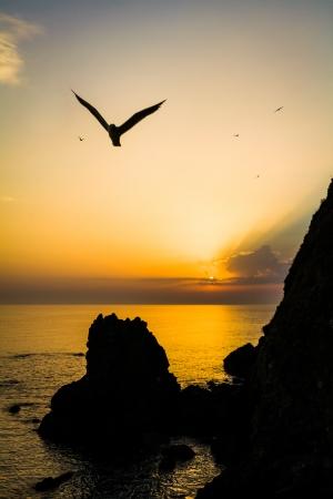 slight: Dark seagull with slight blur over coastline and hills in silhouette Stock Photo