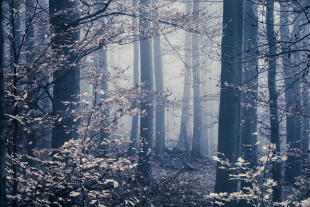 Melancholic foggy forest with bright leaves in the front photo