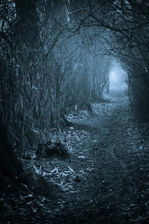 Dark spookachtige passage door het bos, afgezwakt blauw Stockfoto