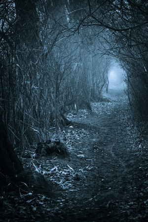 Dark spooky passage through the forest, toned blue photo