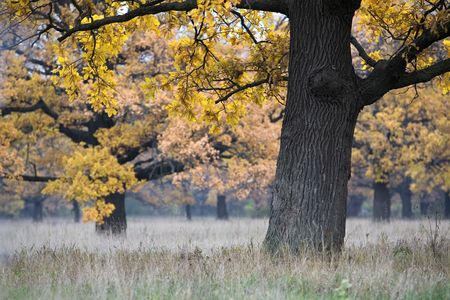 beautiful autumn landscape with an oak in the foreground photo