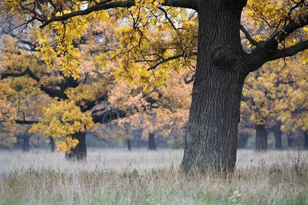 Herbst sch�ne Landschaft mit einer Eiche in den Vordergrund Lizenzfreie Bilder
