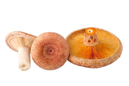 torminosus: edible mushrooms, Lactarius torminosus and Lactarius deliciosus, isolated on white background Stock Photo